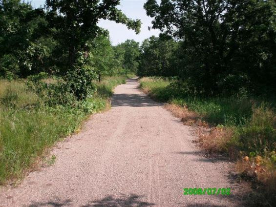 Gravel road with grassy field lined with pine trees
